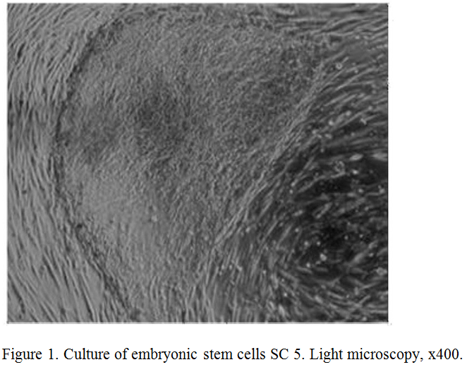 15 culture of embryonic stem cells 01